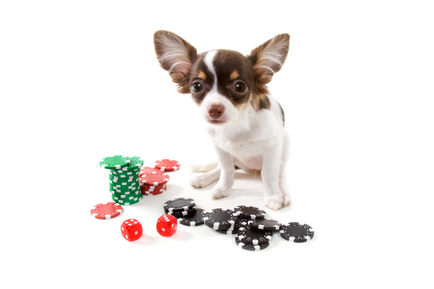 dog gambling