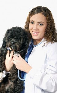 Dog with Veterinarian