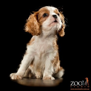 Trevor - Photo taken by Zoo Studio - Animal Art Photography