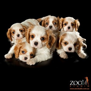Trevor's Litter Photographed By Zoo Studios - Animal Art Photography
